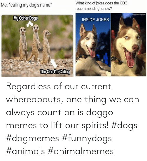 Animals: Regardless of our current whereabouts, one thing we can always count on is doggo memes to lift our spirits! #dogs #dogmemes #funnydogs #animals #animalmemes