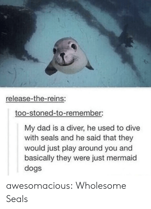 Dad, Dogs, and Tumblr: release-the-reins:  too-stoned-to-remember:  My dad is a diver, he used to dive  with seals and he said that they  would just play around you and  basically they were just mermaid  dogs awesomacious:  Wholesome Seals