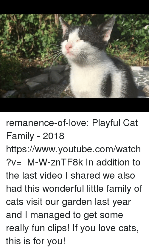 love cats: remanence-of-love:  Playful Cat Family - 2018 https://www.youtube.com/watch?v=_M-W-znTF8k  In addition to the last video I shared we also had this wonderful little family of cats visit our garden last year and I managed to get some really fun clips! If you love cats, this is for you!
