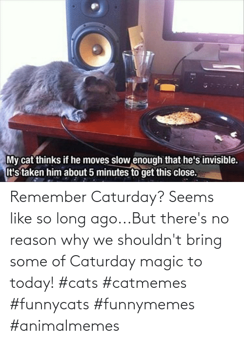 no reason: Remember Caturday? Seems like so long ago...But there's no reason why we shouldn't bring some of Caturday magic to today! #cats #catmemes #funnycats #funnymemes #animalmemes