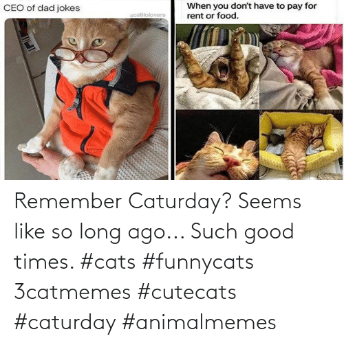 Caturday: Remember Caturday? Seems like so long ago... Such good times. #cats #funnycats 3catmemes #cutecats #caturday #animalmemes