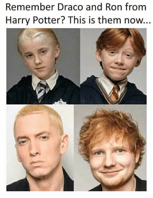 Harry Potter, Memes, and 🤖: Remember Draco and Ron from  Harry Potter? This is them now..