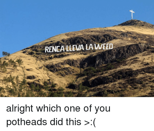 Weed, Charming Chilean, and Alright: RENCALLEVIALA WEED alright which one of you potheads did this >:(