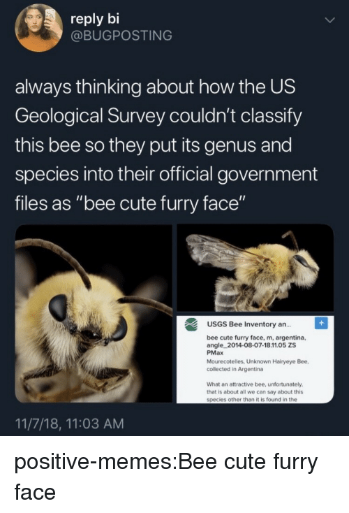 "Cute, Memes, and Target: reply bi  @BUGPOSTING  always thinking about how the US  Geological Survey couldn't classify  this bee so they put its genus and  species into their official government  files as ""bee cute furry face""  USGS Bee Inventory an..  ce, m, argentina,  angle 2014-08-07-18.11.05 ZS  PMax  Mourecotelles, Unknown Hairyeye Bee,  collected in Argentina  What an attractive bee, unfortunately  that is about all we can say about this  species other than it is found in the  11/7/18, 11:03 AM positive-memes:Bee cute furry face"