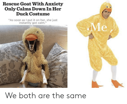 "Soon..., Goat, and Anxiety: Rescue Goat With Anxiety  Only Calms Down In Her  Duck Costume  ""As soon as I put it on her, she just  instantly got calm.""  Me We both are the same"