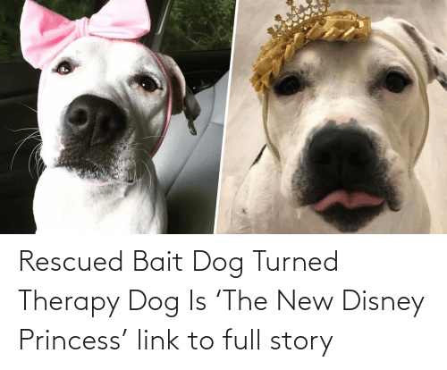 story:   Rescued Bait Dog Turned Therapy Dog Is 'The New Disney Princess'  link to full story