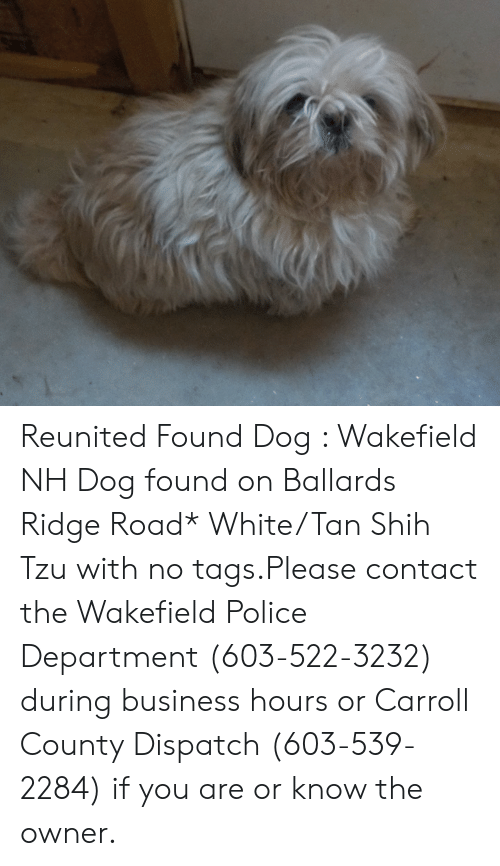 Memes, Police, and Business: Reunited   Found Dog : Wakefield NH  Dog found on Ballards Ridge Road* White/Tan Shih Tzu with no tags.Please contact the Wakefield Police Department (603-522-3232) during business hours or Carroll County Dispatch (603-539-2284) if you are or know the owner.