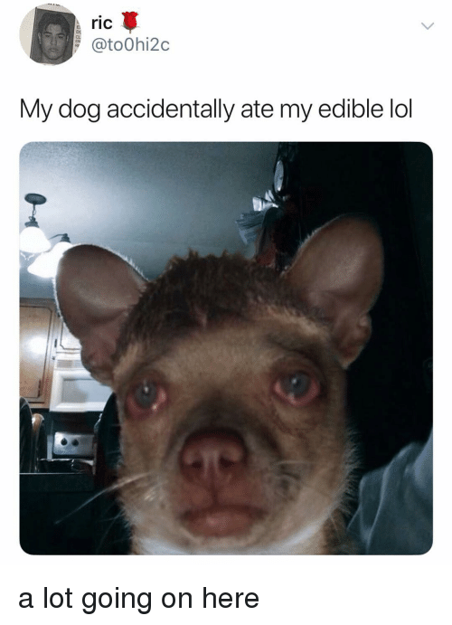 Lol, Memes, and 🤖: ric  @to0hi2c  DC  My dog accidentally ate my edible lol a lot going on here