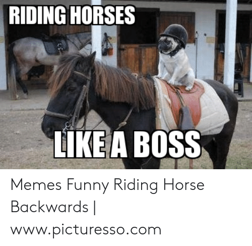 Riding Horses Like A Boss Memes Funny Riding Horse Backwards
