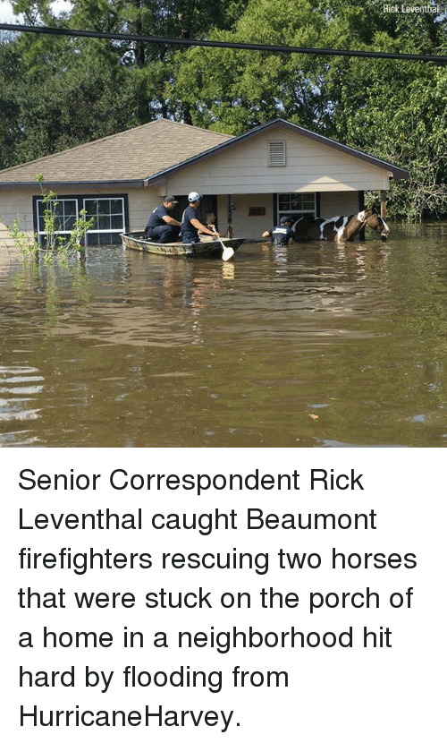 Horses, Memes, and Home: Riok Leventhal Senior Correspondent Rick Leventhal caught Beaumont firefighters rescuing two horses that were stuck on the porch of a home in a neighborhood hit hard by flooding from HurricaneHarvey.