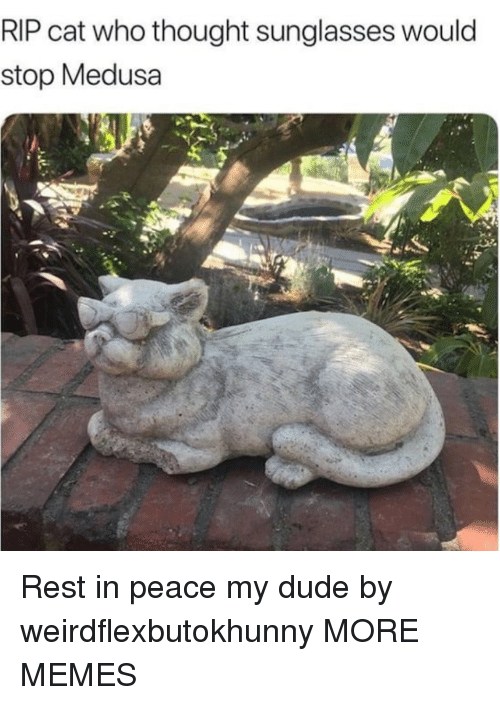 Dank, Dude, and Memes: RIP cat who thought sunglasses would  stop Medusa Rest in peace my dude by weirdflexbutokhunny MORE MEMES