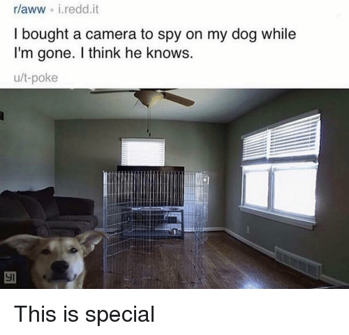 Funny, Camera, and Spy: rlaww i.redd.it  I bought a camera to spy on my dog while  I'm gone. I think he knows  u/t-poke This is special