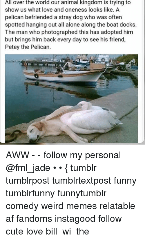 Af, Animals, and Anime: rld over the world our animal kingdom is trying to  show us what love and oneness looks like. A  pelican befriended a stray dog who was often  spotted hanging out all alone along the boat docks.  The man who photographed this has adopted him  but brings him back every day to see his friend,  Petey the Pelican. AWW - - follow my personal @fml_jade • • { tumblr tumblrpost tumblrtextpost funny tumblrfunny funnytumblr comedy weird memes relatable af fandoms instagood follow cute love bill_wi_the