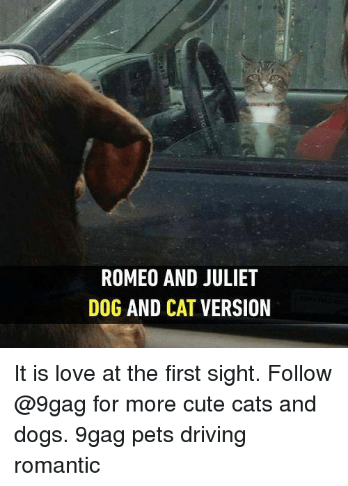 dog-and-cats: ROMEO AND JULIET  DOG AND CAT VERSION  TO  EI  LR  UE  JV  DT  NA  AC  0D  EN  MA  OG  RO It is love at the first sight. Follow @9gag for more cute cats and dogs. 9gag pets driving romantic