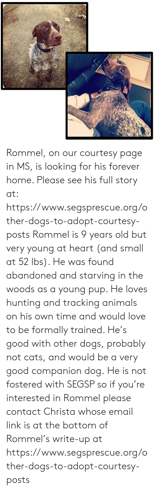 Animals, Cats, and Dogs: Rommel, on our courtesy page in MS, is looking for his forever home.  Please see his full story at:  https://www.segsprescue.org/other-dogs-to-adopt-courtesy-posts   Rommel is 9 years old but very young at heart (and small at 52 lbs).  He was found abandoned and starving in the woods as a young pup. He loves hunting and tracking animals on his own time and would love to be formally trained. He's good with other dogs, probably not cats, and would be a very good companion dog.  He is not fostered with SEGSP so if you're interested in Rommel please contact Christa whose email link is at the bottom of Rommel's write-up at https://www.segsprescue.org/other-dogs-to-adopt-courtesy-posts