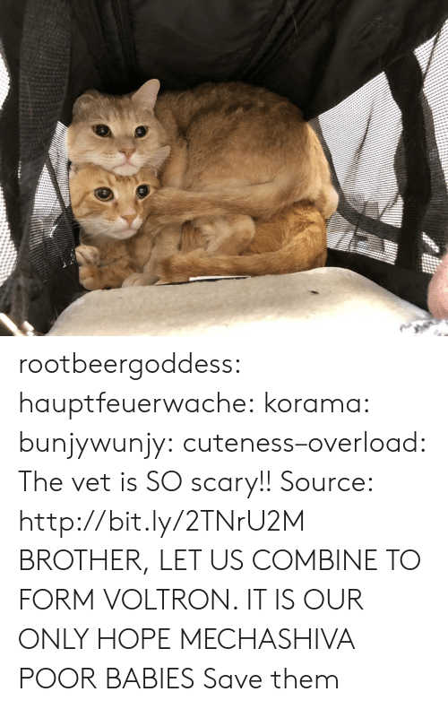 cuteness: rootbeergoddess: hauptfeuerwache:  korama:   bunjywunjy:  cuteness–overload:   The vet is SO scary!! Source: http://bit.ly/2TNrU2M   BROTHER, LET US COMBINE TO FORM VOLTRON. IT IS OUR ONLY HOPE   MECHASHIVA   POOR BABIES   Save them