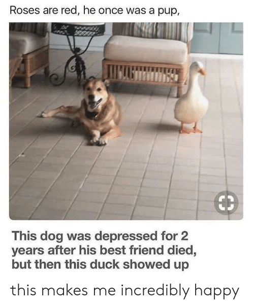 Best Friend, Best, and Duck: Roses are red, he once was a pup,  This dog was depressed for 2  years after his best friend died,  but then this duck showed up this makes me incredibly happy