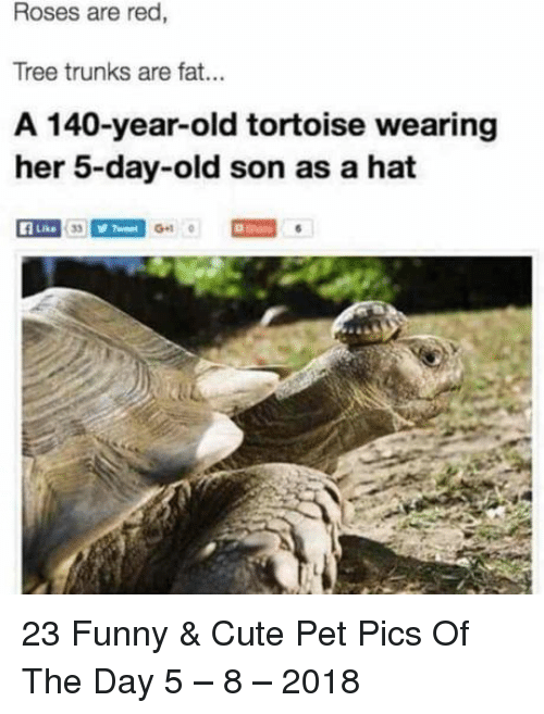 Trunks: Roses are red,  Tree trunks are fat..  A 140-year-old tortoise wearing  her 5-day-old son as a hat  f Like  Gu 23 Funny & Cute Pet Pics Of The Day 5 – 8 – 2018
