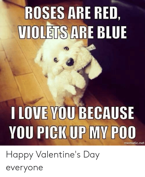 Love, Memes, and Valentine's Day: ROSES ARE RED,  VIOLETS AR  E BLUE  I LOVE YOU BECAUSE  YOU PICK UP MY POO  mematic.net Happy Valentine's Day everyone