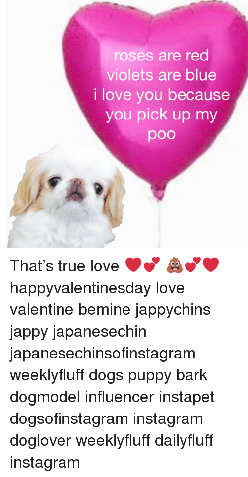 Dogs, Instagram, and Love: roses are red  violets are blue  i love you because  you pick up my  poo That's true love ❤️💕 💩💕❤️ happyvalentinesday love valentine bemine jappychins jappy japanesechin japanesechinsofinstagram weeklyfluff dogs puppy bark dogmodel influencer instapet dogsofinstagram instagram doglover weeklyfluff dailyfluff instagram
