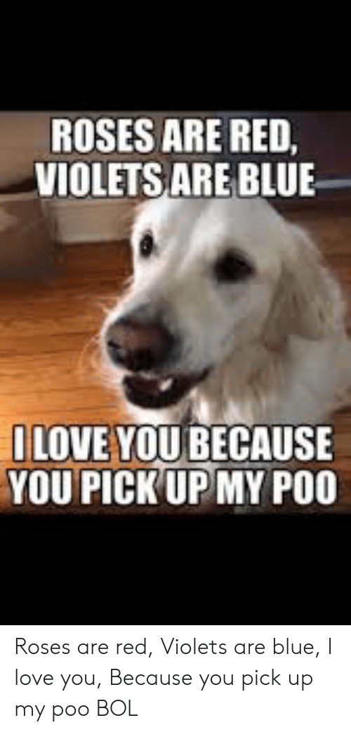 Love, Memes, and I Love You: ROSES ARE RED,  VIOLETS ARE BLUE  ILOVE YOU BECAUSE  YOU PICK UPMY PO0 Roses are red, Violets are blue, I love you, Because you pick up my poo               BOL