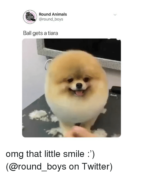 Animals, Memes, and Omg: Round Animals  @round_boys  Ball gets a tiara omg that little smile :') (@round_boys on Twitter)