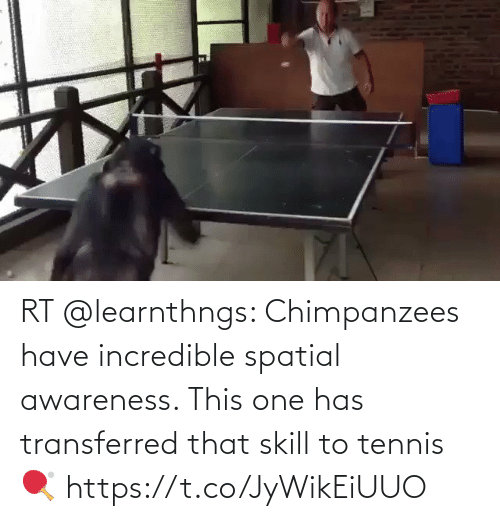 Has: RT @learnthngs: Chimpanzees have incredible spatial awareness. This one has transferred that skill to tennis 🏓 https://t.co/JyWikEiUUO