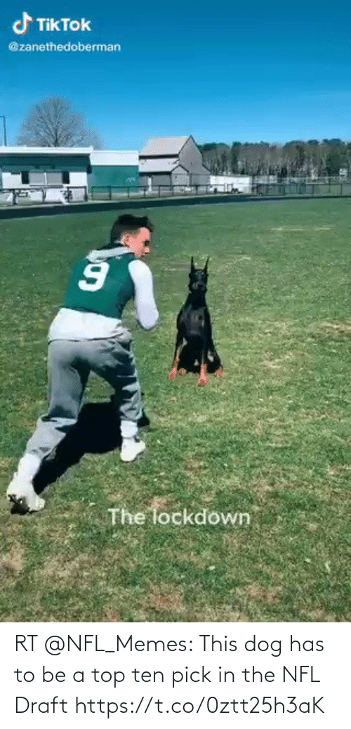 NFL draft: RT @NFL_Memes: This dog has to be a top ten pick in the NFL Draft https://t.co/0ztt25h3aK