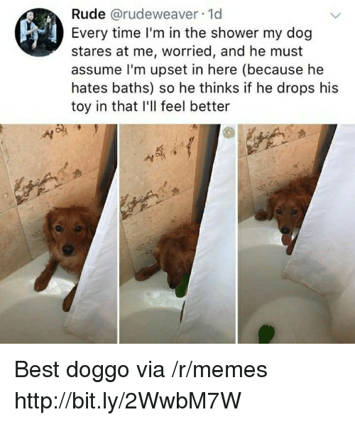 Memes, Rude, and Shower: Rude @rudeweaver 1d  Every time I'm in the shower my dog  stares at me, worried, and he must  assume l'm upset in here (because he  hates baths) so he thinks if he drops his  toy in that I'll feel better Best doggo via /r/memes http://bit.ly/2WwbM7W