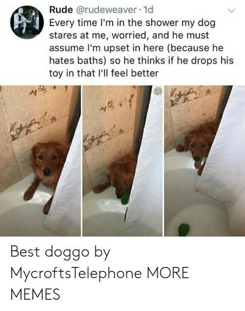Dank, Memes, and Rude: Rude @rudeweaver 1d  Every time I'm in the shower my dog  stares at me, worried, and he must  assume l'm upset in here (because he  hates baths) so he thinks if he drops his  toy in that I'll feel better Best doggo by MycroftsTelephone MORE MEMES