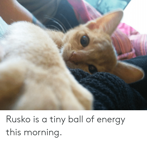 Energy, Tiny, and Ball: Rusko is a tiny ball of energy this morning.