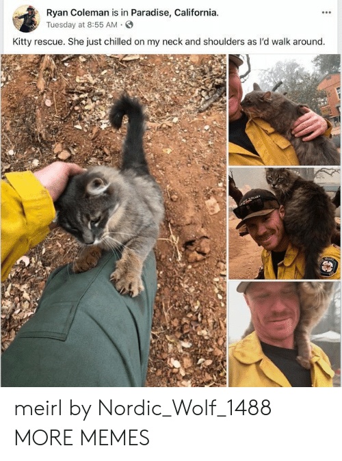 chilled: Ryan Coleman is in Paradise, California  yTuesday at 8:55 AM.S  Kitty rescue. She just chilled on my neck and shoulders as l'd walk around meirl by Nordic_Wolf_1488 MORE MEMES
