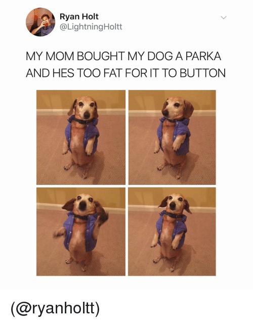 Dank Memes, Fat, and Mom: Ryan Holt  @LightningHoltt  MY MOM BOUGHT MY DOG A PARKA  AND HES TOO FAT FOR IT TO BUTTON (@ryanholtt)
