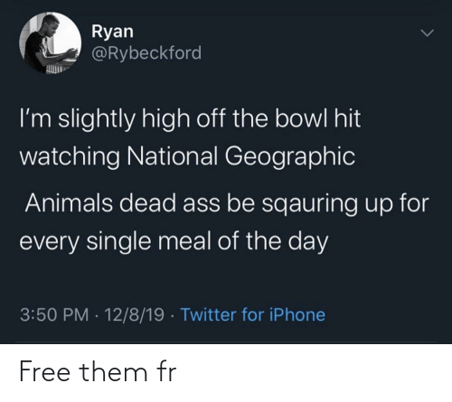 Geographic: Ryan  @Rybeckford  I'm slightly high off the bowl hit  watching National Geographic  Animals dead ass be sqauring up for  every single meal of the day  3:50 PM · 12/8/19 · Twitter for iPhone Free them fr