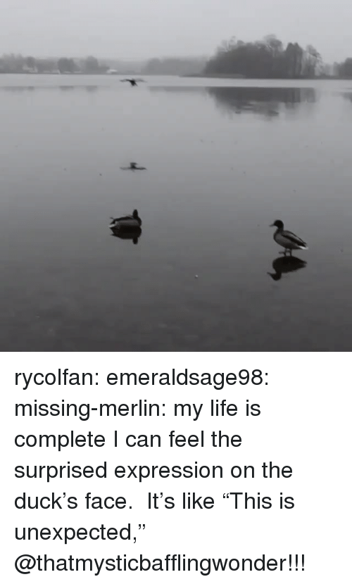 "Life, Target, and Tumblr: rycolfan: emeraldsage98:  missing-merlin: my life is complete I can feel the surprised expression on the duck's face.  It's like ""This is unexpected,""  @thatmysticbafflingwonder!!!"