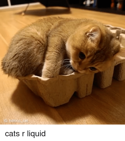 Liquidized: S cats r liquid