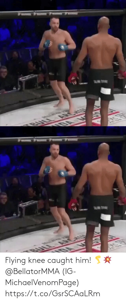 Flying: S SE  BULL ARCHU  DA   S SE  U  BULL A CH Flying knee caught him! 🦵💥 @BellatorMMA (IG-MichaelVenomPage) https://t.co/GsrSCAaLRm