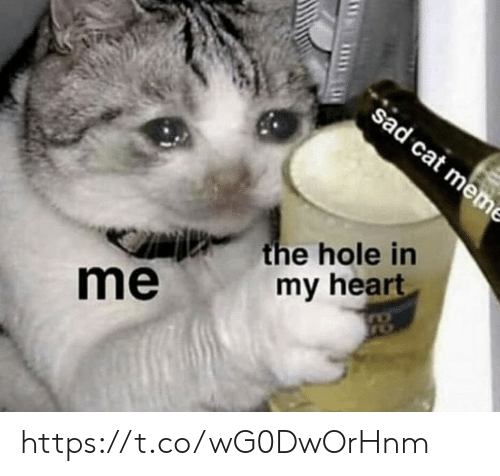 Meme, Memes, and Heart: sad cat meme  the hole in  my heart  me https://t.co/wG0DwOrHnm
