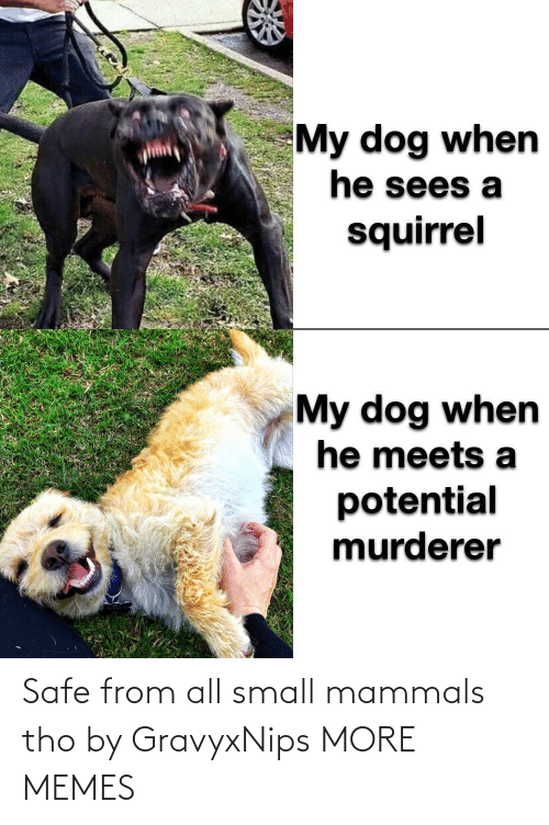safe: Safe from all small mammals tho by GravyxNips MORE MEMES