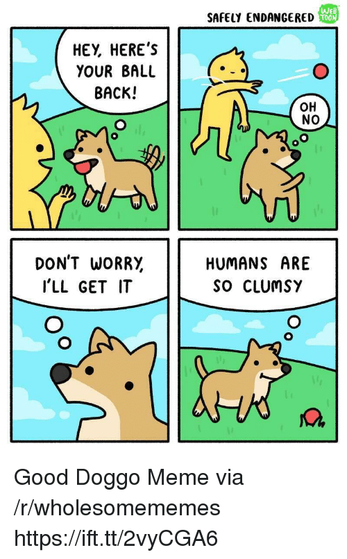 Anaconda, Meme, and Good: SAFELY ENDANGERED  We  100  HEY, HERE'S  YOUR BALL  BACK!  OH  NO  DON'T WORR,  I'LL GET IT  HUMANS ARE  So CLUmSY  M. Good Doggo Meme via /r/wholesomememes https://ift.tt/2vyCGA6