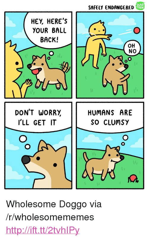 "Http, Wholesome, and Back: SAFELY ENDANGERED  WE  T00  HEY, HERE'S  YOUR BALL  BACK!  OH  NO  DON'T WORR,  I'LL GET IT  HUMANS ARE  So CLUmSY <p>Wholesome Doggo via /r/wholesomememes <a href=""http://ift.tt/2tvhIPy"">http://ift.tt/2tvhIPy</a></p>"