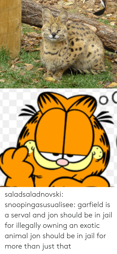 Jail, Target, and Tumblr: saladsaladnovski: snoopingasusualisee:  garfield is a serval and jon should be in jail for illegally owning an exotic animal  jon should be in jail for more than just that