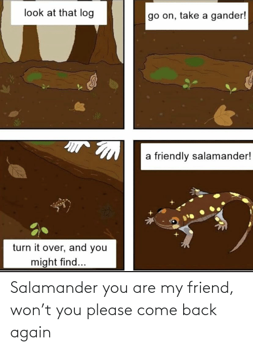 come back: Salamander you are my friend, won't you please come back again