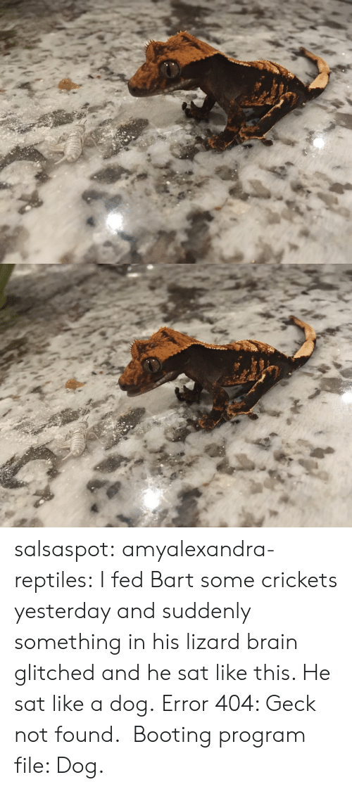 crickets: salsaspot: amyalexandra-reptiles: I fed Bart some crickets yesterday and suddenly something in his lizard brain glitched and he sat like this. He sat like a dog. Error 404: Geck not found.  Booting program file: Dog.