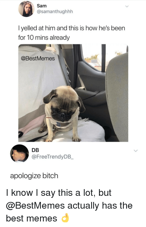 Bitch, Memes, and Best: Sam  @samanthughhh  I yelled at him and this is how he's been  for 10 mins already  @BestMemes  DB  @FreeTrendyDB  apologize bitch I know I say this a lot, but @BestMemes actually has the best memes 👌