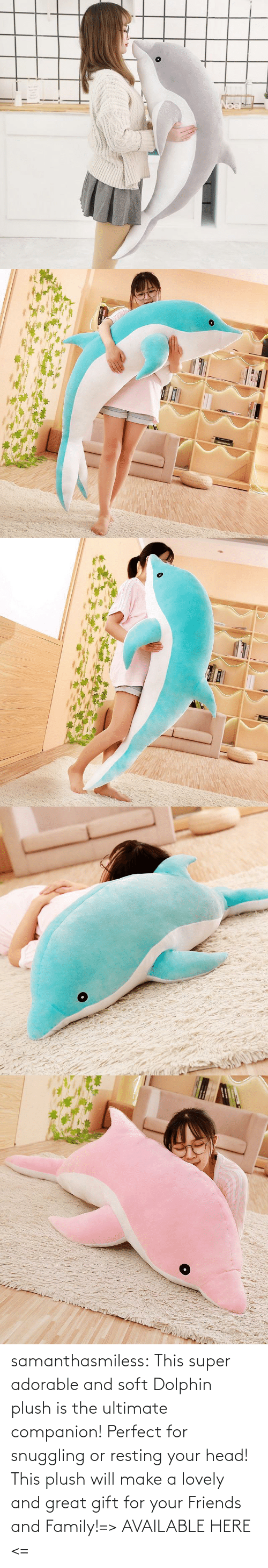 Family, Friends, and Head: samanthasmiless:  This super adorable and soft Dolphin plush is the ultimate companion! Perfect for snuggling or resting your head! This plush will make a lovely and great gift for your Friends and Family!=> AVAILABLE HERE <=