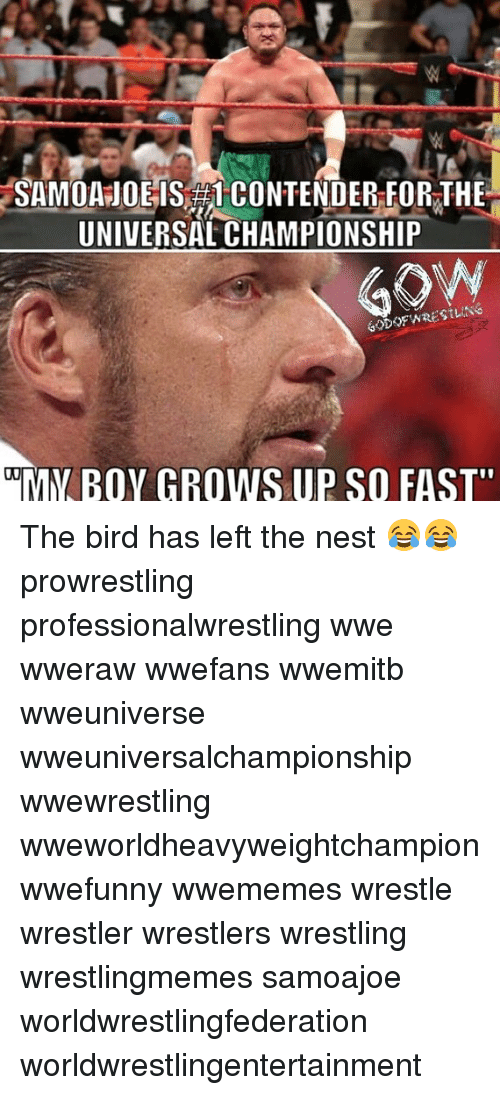 "nesting: SAMOA JOE IS CONTENDER FOR THE  UNIVERSAL CHAMPIONSHIP  MY BOY GROWS UP SO FAST"" The bird has left the nest 😂😂 prowrestling professionalwrestling wwe wweraw wwefans wwemitb wweuniverse wweuniversalchampionship wwewrestling wweworldheavyweightchampion wwefunny wwememes wrestle wrestler wrestlers wrestling wrestlingmemes samoajoe worldwrestlingfederation worldwrestlingentertainment"