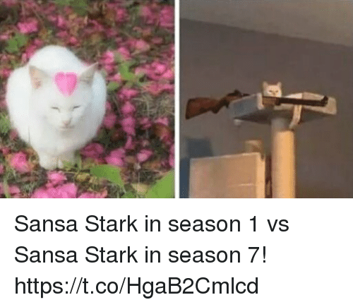 Memes, Sansa Stark, and 🤖: Sansa Stark in season 1 vs Sansa Stark in season 7! https://t.co/HgaB2Cmlcd