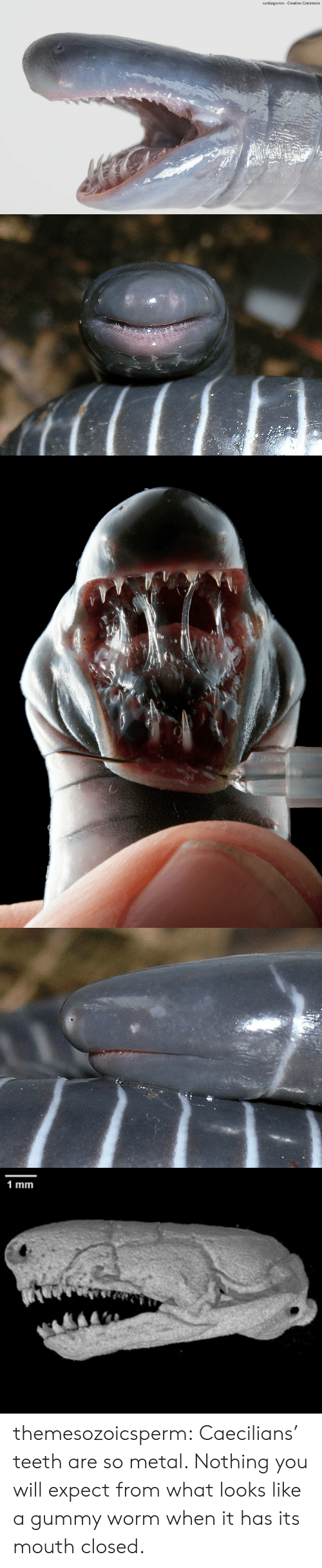 Target, Tumblr, and Blog: santiago ron- Creative Commons   1 mm themesozoicsperm:  Caecilians' teeth are so metal. Nothing you will expect from what looks like a gummy worm when it has its mouth closed.