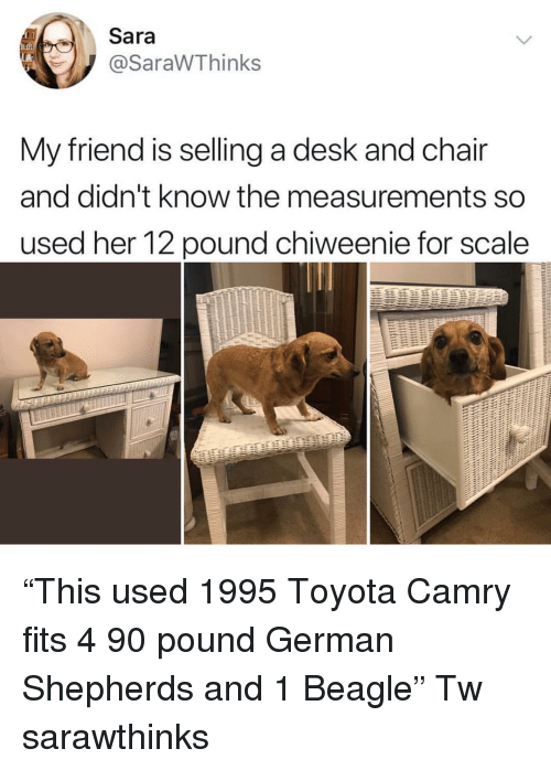 """For Scale: Sara  @SaraWThinks  My friend is selling a desk and chair  and didn't know the measurements so  used her 12 pound chiweenie for scale """"This used 1995 Toyota Camry fits 4 90 pound German Shepherds and 1 Beagle"""" Tw sarawthinks"""